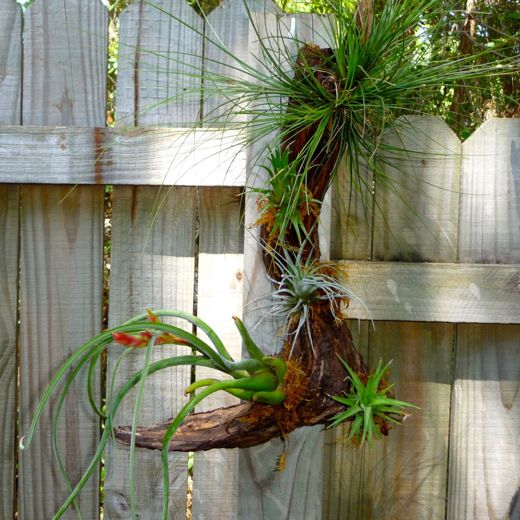 gnarly wooded air plants craft organic