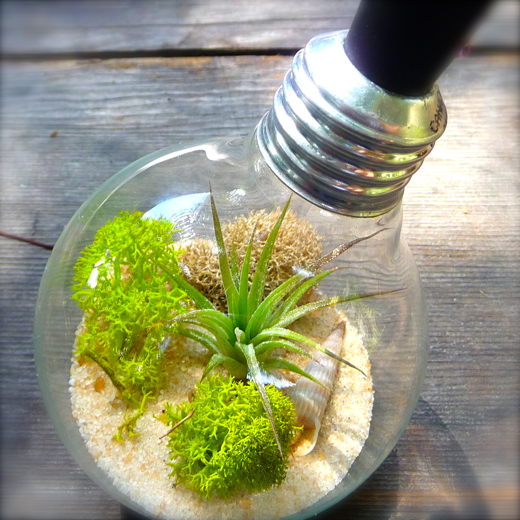 terrarium craft ideas light bulb terrarium extinction craft organic 3066