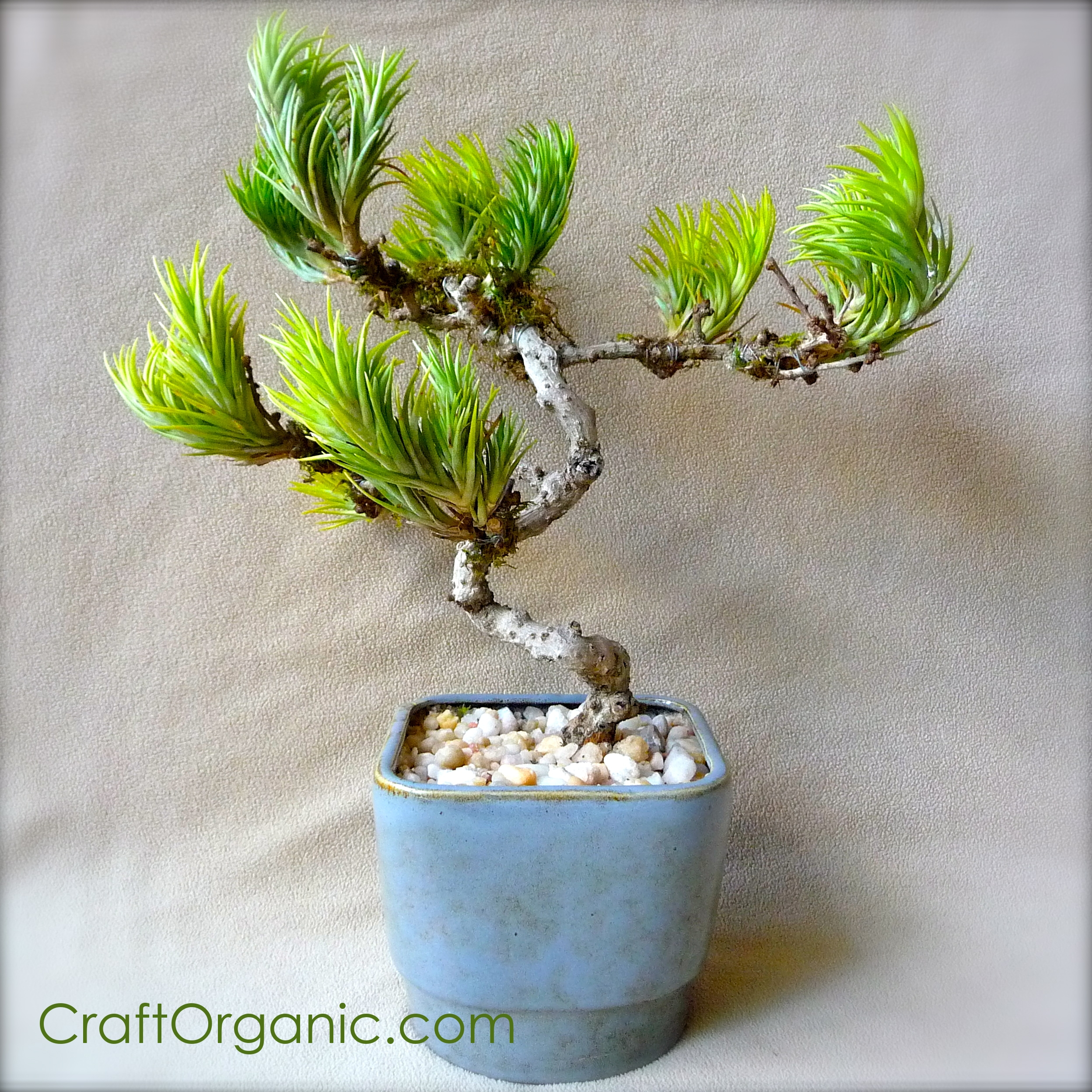 Make A Faux Bonsai Tree With Air Plants Craft Organic