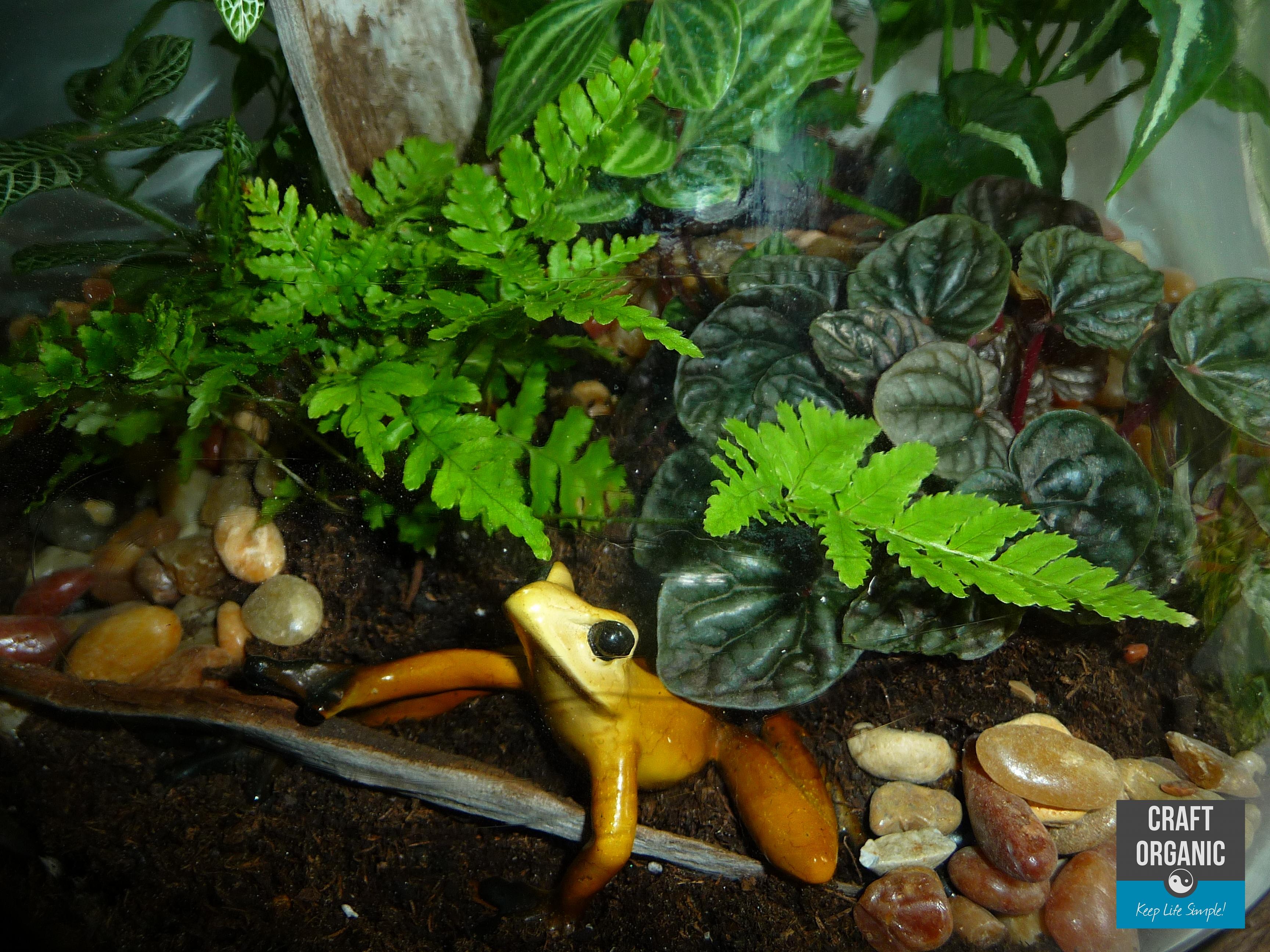 Террариум для наземных лягушек и жаб, размеры террариума 87