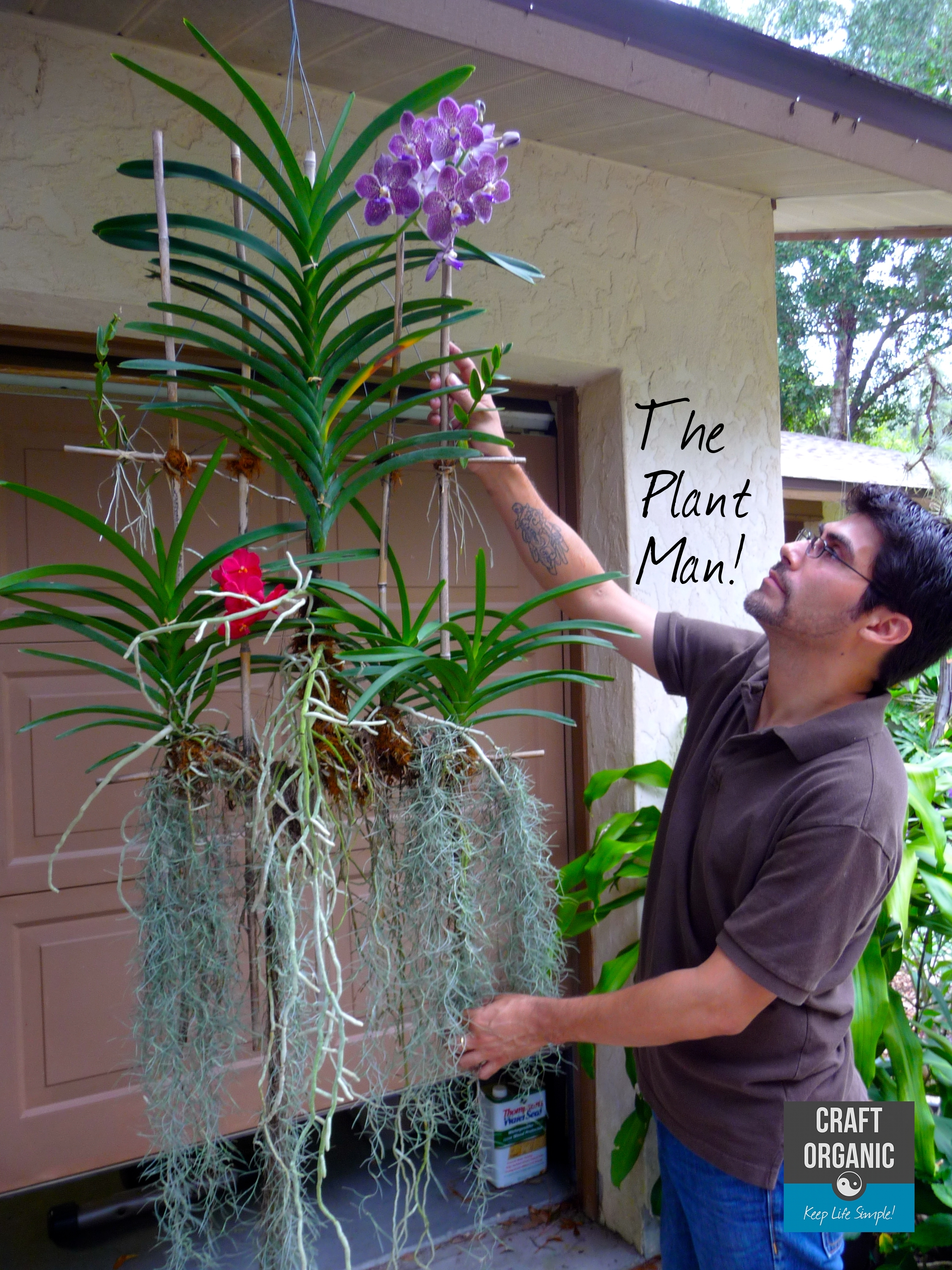 Orchids on bamboo lattice revisited craft organic How do you care for orchids after they bloom