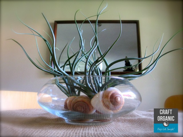 Air Plant Centerpiece