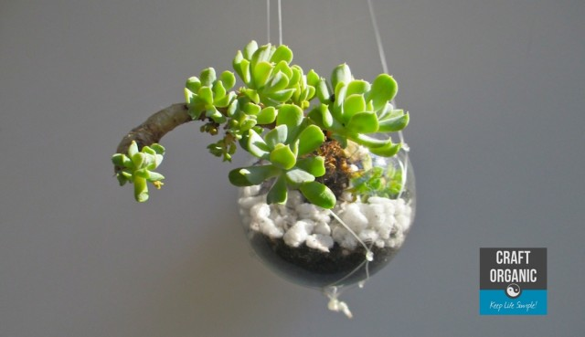 Succulent in Light Bulb 03