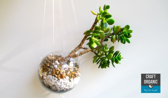 Succulent in Light Bulb 04