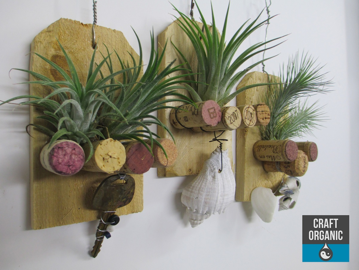 Tillandsia and cork plaque craft organic for Air plant art