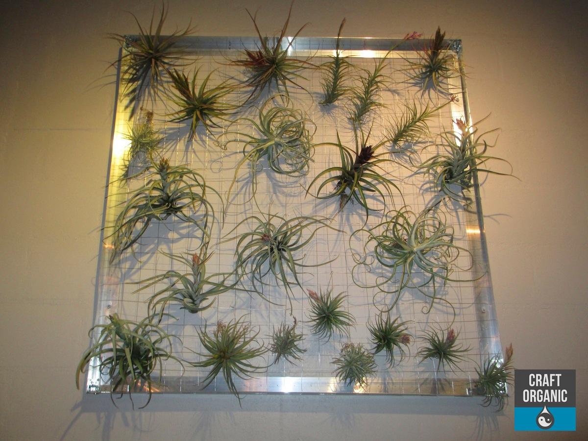 A Living Tillandsia Wall Installation Craft Organic