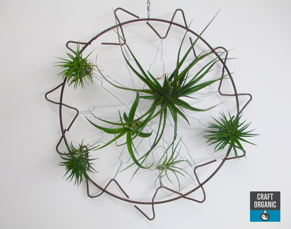 Small tillandsia screen craft organic