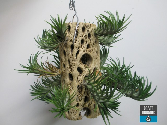 Tillandsia on Wood 03