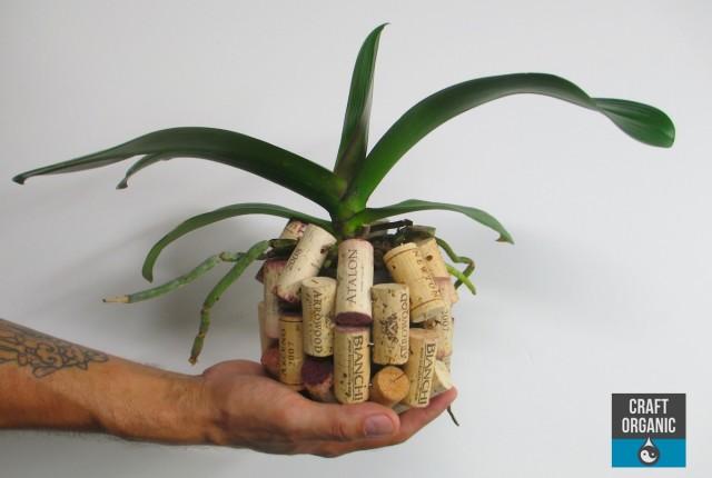 Orchid Basket