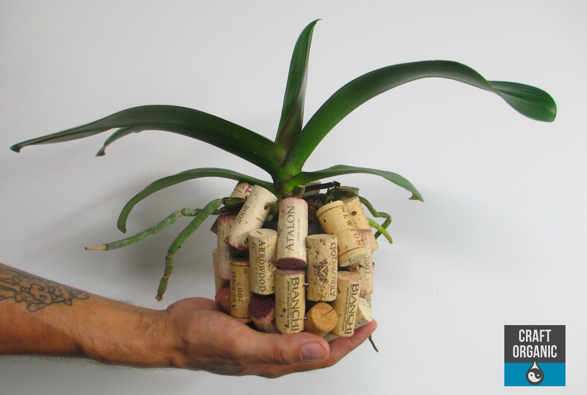 Repurposing Corks For Air Plants And Orchids Craft Organic