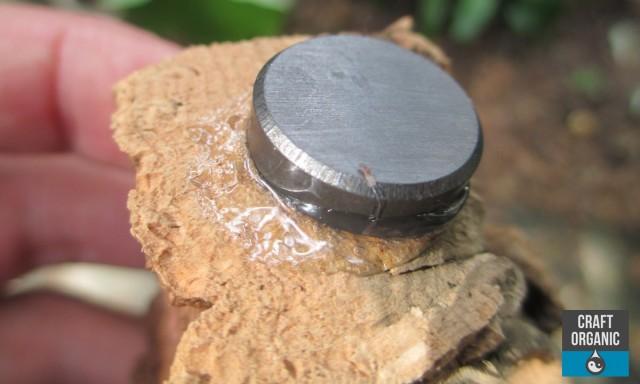 Tillandsia Fridge Magnets 01