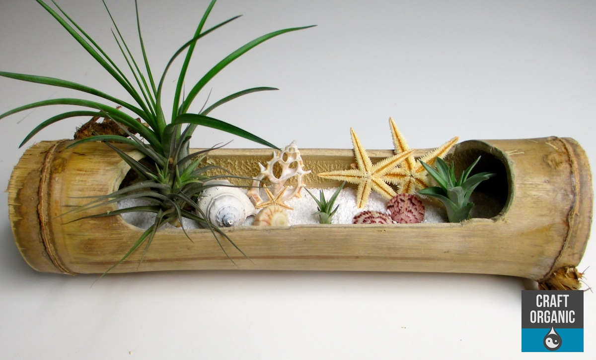 tillandsia beach landscape in bamboo craft organic