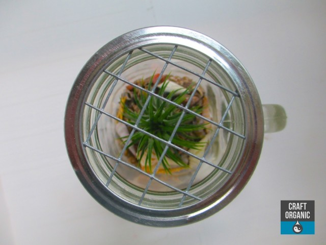 Mason Jar Terrarium Lid 01