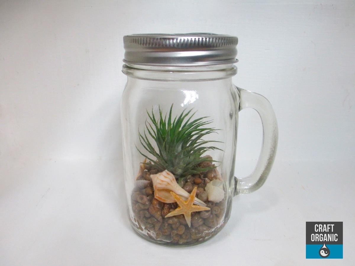 Tillandsia Terrarium In A Mason Jar Mug Craft Organic
