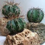 Grow Succulents and Bromeliads on Hypertufa!